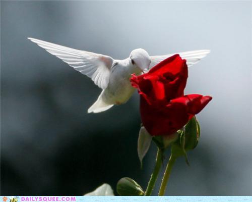 albino_hummingbird